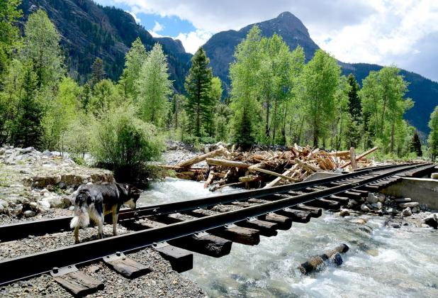 Durango & Silverton Narrow Gauge Railroad tracks near the Elk Creek headwaters. The train is not expected to Silverton for eight to i6 weeks, railroad officials now say. Criss Furman/Silverton Standard